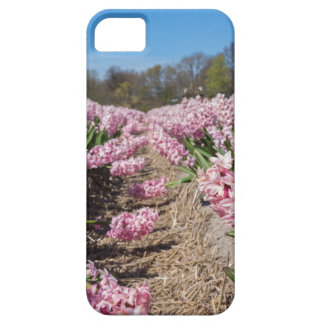 Flowers field with pink hyacinths in Holland iPhone 5 Cases