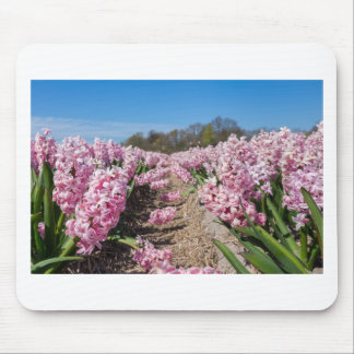 Flowers field with pink hyacinths in Holland Mouse Pad