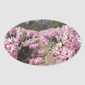 Flowers field with pink hyacinths in Holland Oval Sticker