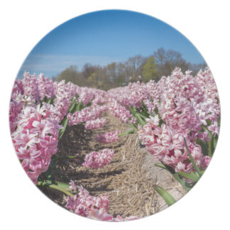 Flowers field with pink hyacinths in Holland Party Plates
