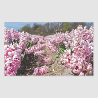 Flowers field with pink hyacinths in Holland Sticker