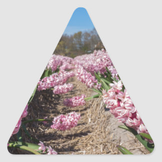 Flowers field with pink hyacinths in Holland Triangle Sticker