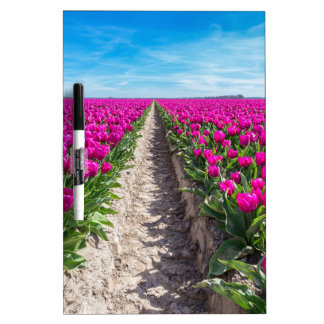 Flowers field with purple tulips and path dry erase board