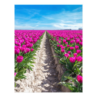 Flowers field with purple tulips and path letterhead
