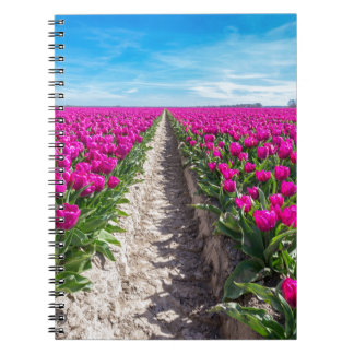 Flowers field with purple tulips and path notebooks