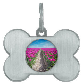 Flowers field with purple tulips and path pet tags