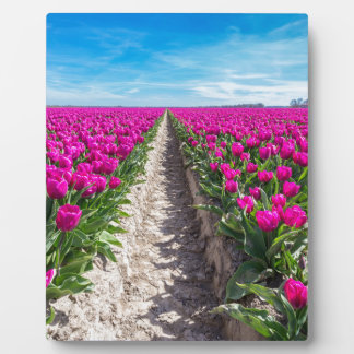 Flowers field with purple tulips and path plaque