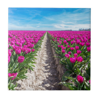 Flowers field with purple tulips and path tile