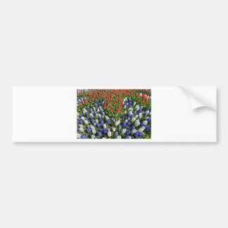 Flowers field with red blue tulips and hyacinths bumper sticker