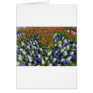 Flowers field with red blue tulips and hyacinths card