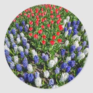 Flowers field with red blue tulips and hyacinths classic round sticker
