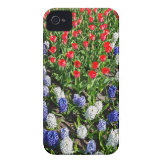 Flowers field with red blue tulips and hyacinths iPhone 4 cases