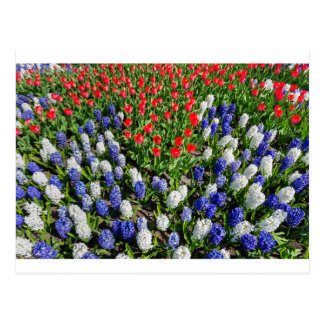 Flowers field with red blue tulips and hyacinths postcard