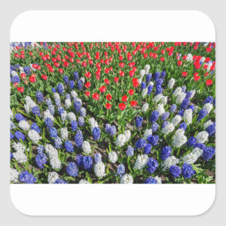 Flowers field with red blue tulips and hyacinths square sticker