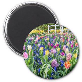 Flowers field with tulips hyacinths and bridge magnet