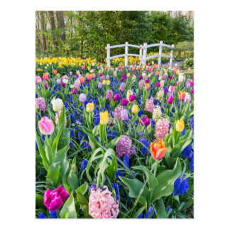 Flowers field with tulips hyacinths and bridge postcard