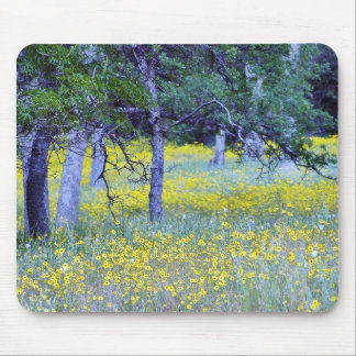 Flowers Fields Forests Oaks Mouse Pad