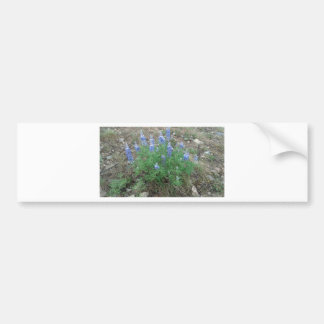 Flowers in Brekenridge Bumper Sticker