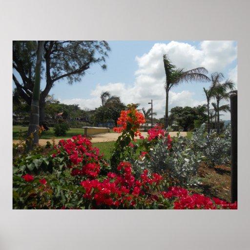 Flowers in Hospital Park Montego Bay Huge Print
