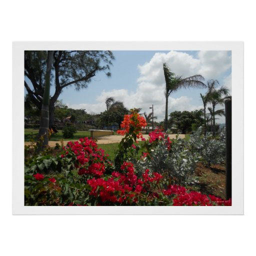 Flowers in Hospital Park Montego Bay Posters