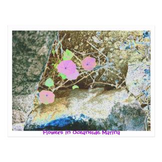 Flowers in Oceanside Marina Postcard