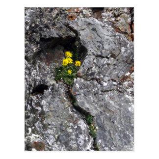 Flowers in Rock Postcard