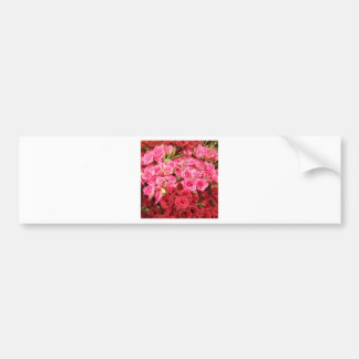 Flowers in the Philippines, pink and red roses Bumper Sticker