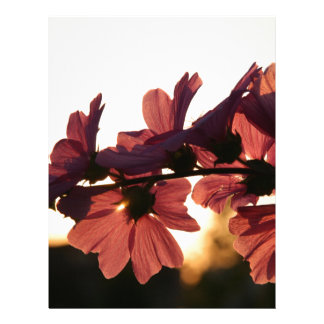 Flowers in the Sunset Letterhead