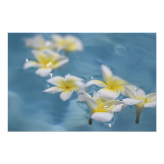 Flowers in water poster