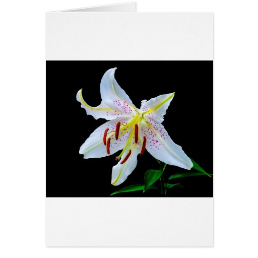 Flowers Lilies Blossoms Wedding Shower Love Peace Greeting Card