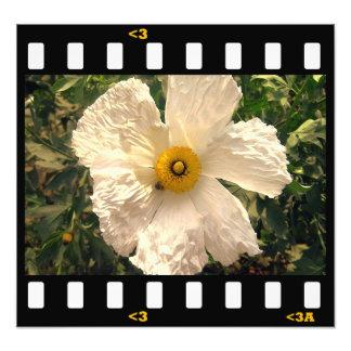 flowers- matilija poppy photo