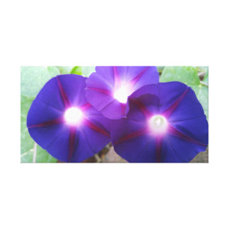 FLOWERS-MORNING GLORIES CANVAS PRINT