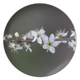 Flowers of a Blackthorn bush Party Plates