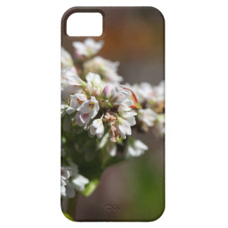 Flowers of a Buckwheat plant (Fagopyrum esculentum Case For The iPhone 5