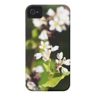 Flowers of a Buckwheat plant (Fagopyrum esculentum iPhone 4 Case-Mate Case