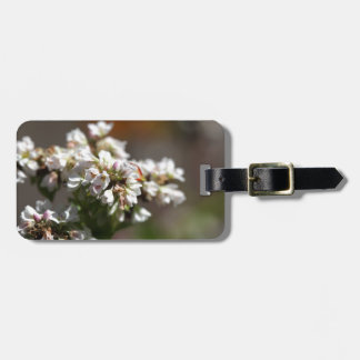 Flowers of a Buckwheat plant (Fagopyrum esculentum Luggage Tag