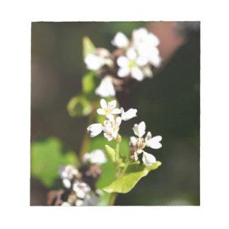 Flowers of a Buckwheat plant (Fagopyrum esculentum Notepad