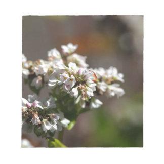 Flowers of a Buckwheat plant (Fagopyrum esculentum Notepads