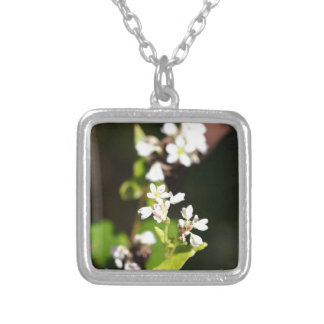 Flowers of a Buckwheat plant (Fagopyrum esculentum Silver Plated Necklace