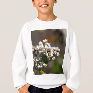 Flowers of a Buckwheat plant (Fagopyrum esculentum Sweatshirt