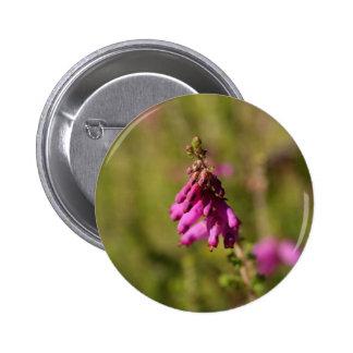 Flowers of a Dorset heath (Erica cilaris) 2 Inch Round Button