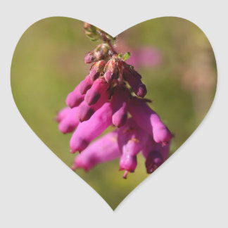 Flowers of a Dorset heath (Erica cilaris) Heart Sticker