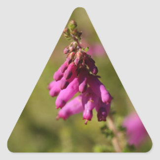 Flowers of a Dorset heath (Erica cilaris) Triangle Sticker