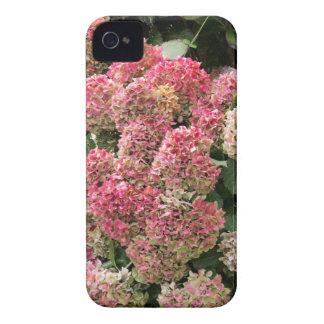Flowers of a French hydrangea (Hydrangea macrophyl iPhone 4 Case