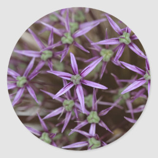 Flowers of a Persian onion Round Sticker