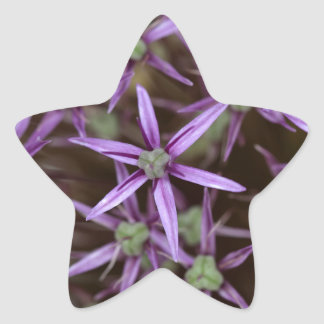 Flowers of a Persian onion Star Sticker