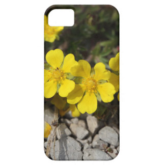 Flowers of a spring cinquefoil iPhone 5 cover