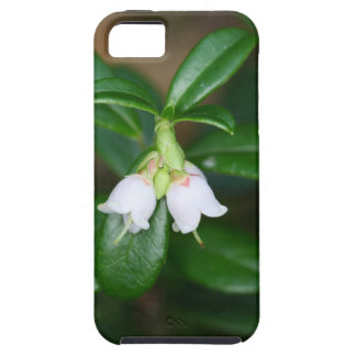 Flowers of a wild lingonberry (Vaccinium vitis-ide iPhone 5 Covers