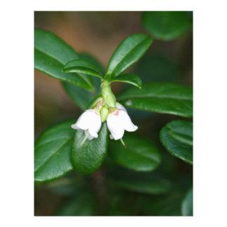 Flowers of a wild lingonberry (Vaccinium vitis-ide Letterhead