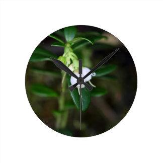 Flowers of a wild lingonberry (Vaccinium vitis-ide Round Clock